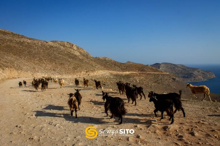 Creta, capre